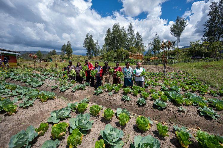 """Dengan Program """"Bangga Papua"""", Warga Pedalaman Punya NIK, Bisa Beternak, dan Perbaiki Gizi Anak"""