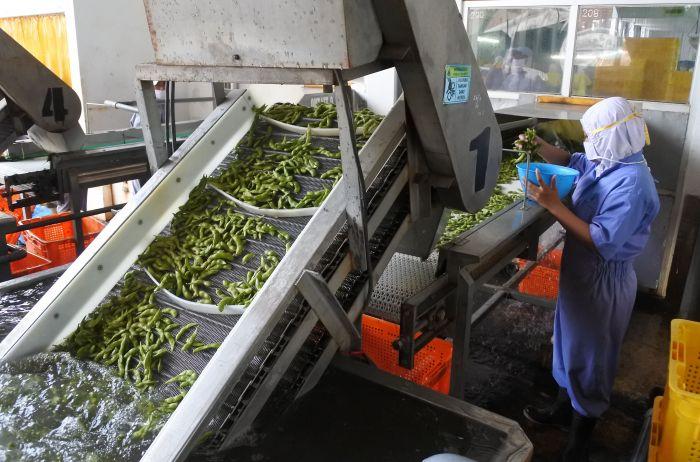 Hasil Ekspor Pertanian Indonesia Meningkat 24,35 Persen