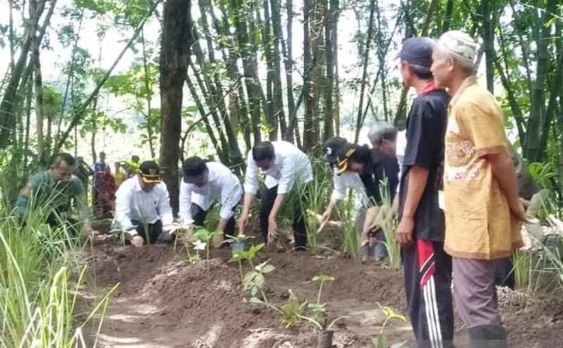 Cegah Longsor Di Hulu Gajah Mungkur, Jokowi Tanam Vertiver