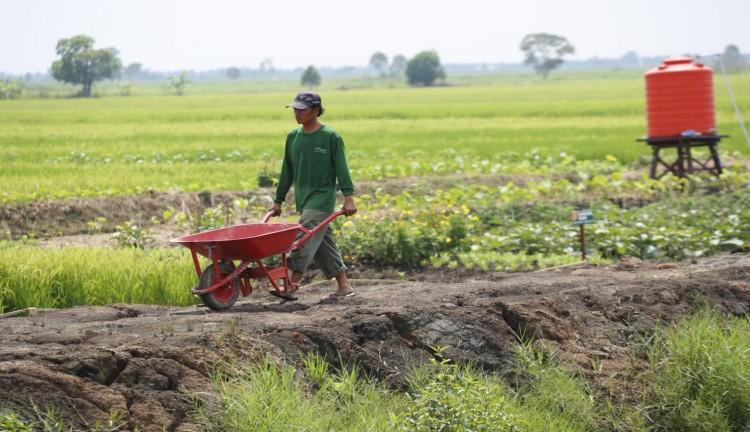 Omnibus Law Sektor Pertanian Berpeluang Menurunkan Angka Stunting