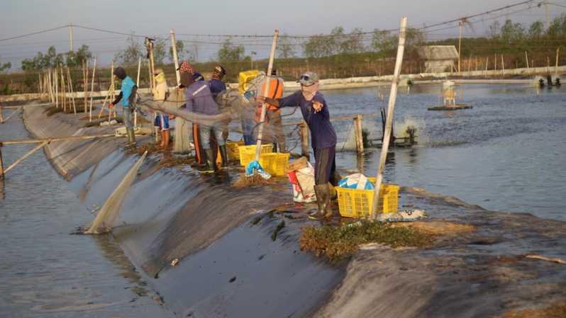 Tingkatkan Produksi dan Ekspor Udang, Pemerintah Bentuk Pokja Udang Nasional