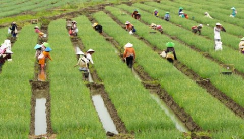 RUU Omnibus Law Cipta Kerja Diharapkan Mampu Cegah Alih Fungsi Lahan Pertanian