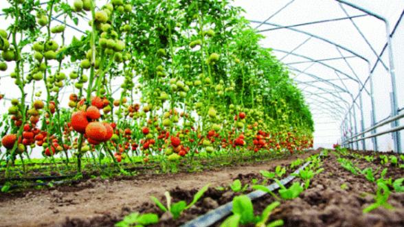 Peneliti CIPS: RUU Cipta Kerja buka peluang investasi pertanian