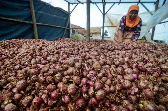 Produksi Pertanian dan Sayuran Meningkat, Ekspor Tumbuh Positif