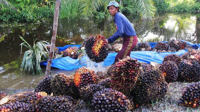 Wamen ATR Klaim RUU Omnibus Law Akan Perbaiki Regulasi Industri Sawit