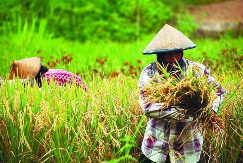 Legislator apresiasi upaya pemerintah gencarkan pertanian modern