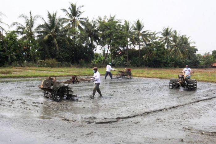 Kebijakan New Normal Dongkrak Kesejahteraan Petani Kembali