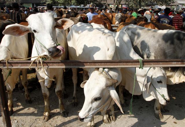 UGM Rekomendasikan Penyembelihan Hewan Kurban Terapkan Protokol Kesehatan Covid-19