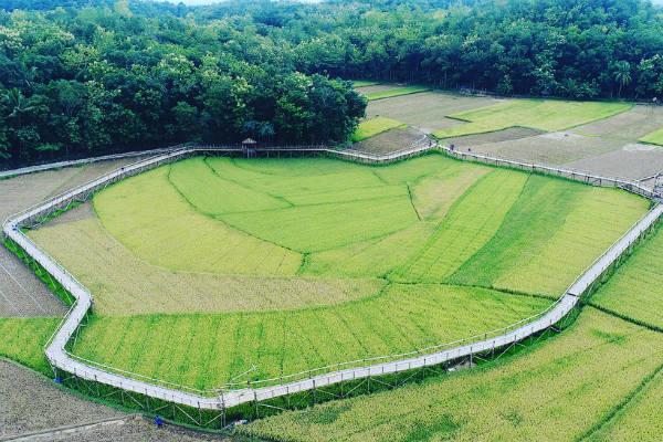 Di Kulonprogo, Potensi Cetak Sawah Baru Capai 135,5 Hektare