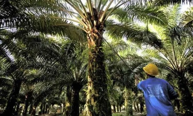 Pemerintah Gencarkan Promosi untuk Tingkatkan Ekspor Kelapa Sawit di Tengah Pandemi