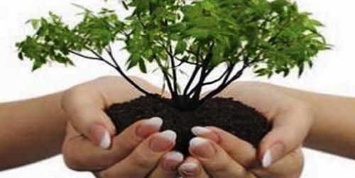 Pemerintah Tidak Sembarangan Pilih Investor, Semua Harus Peduli Lingkungan