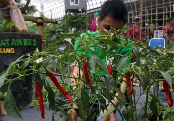 RUU Cipta Kerja Dinilai Buka Peluang Investasi pada Sektor Pertanian