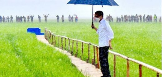 Jokowi Sebut Tak Akan Impor Beras hingga Juni, Agar Harga Gabah Petani Stabil